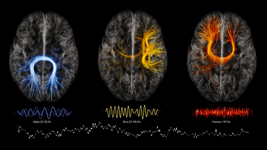 Les rythmes du cerveau